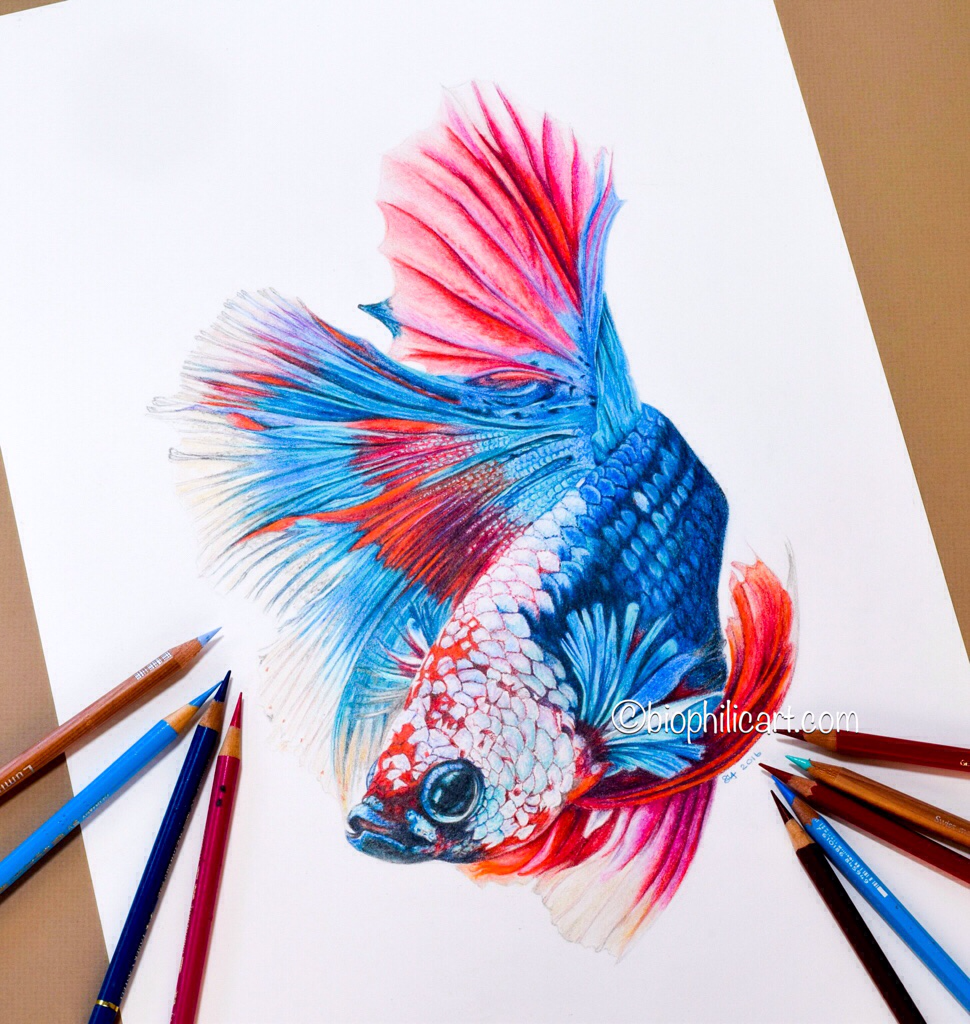 Colored Pencil Drawings Of Marbles : Original artwork page