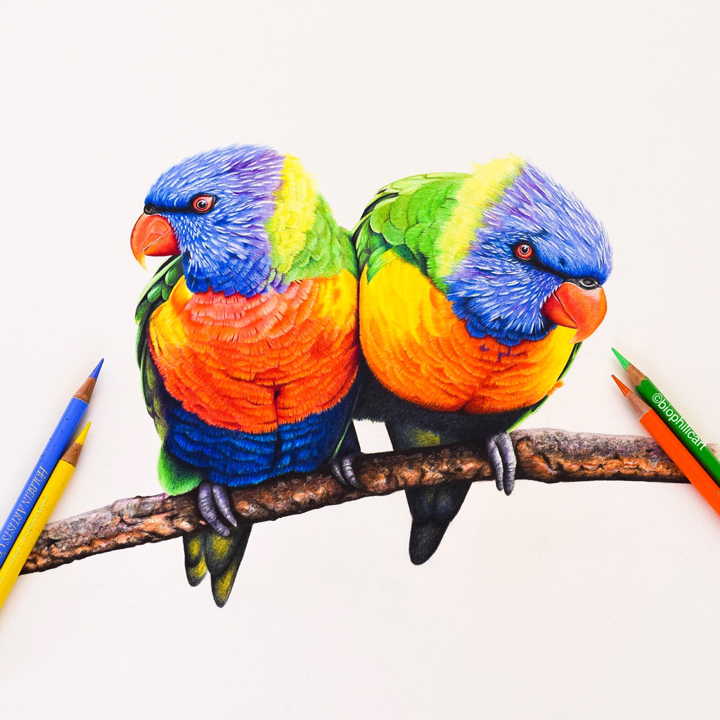 Picture of a pair of Lorikeets drawn using colored pencils. Colored pencil drawing of parrots.