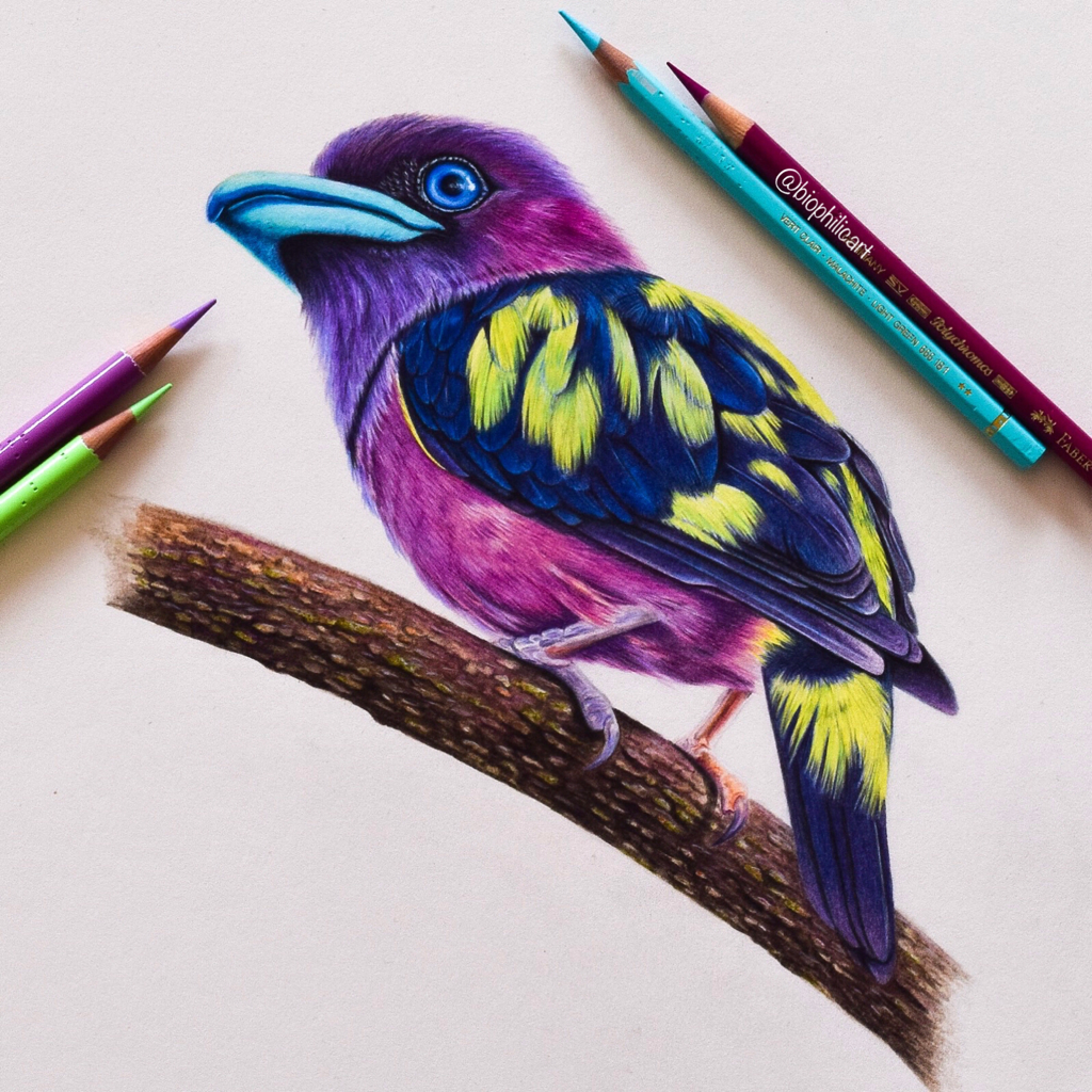 Picture of a Banded Broadbill bird drawn using colored pencils. Unusual bird with blue beak and eyes and bright yellow feathers.