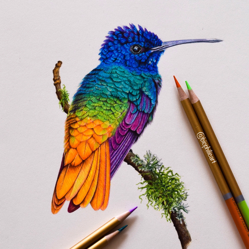 Pictured a hummingbird on a mossy branch drawn using colored pencils. Rainbow colored hummingbird colored pencil art.