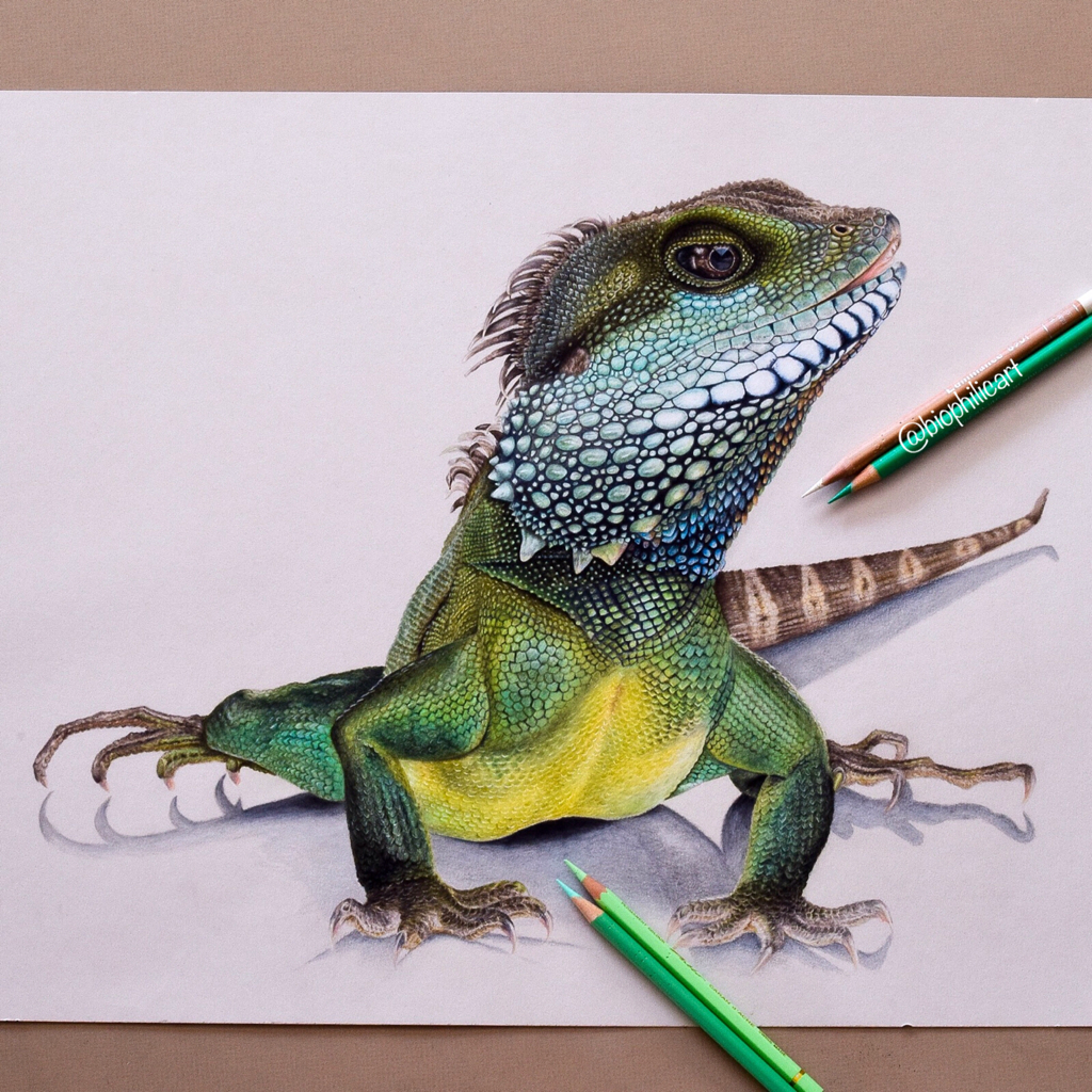 Picture of a Chinese water dragon drawn using colored pencils.  coloured pencil drawing of a lizard.