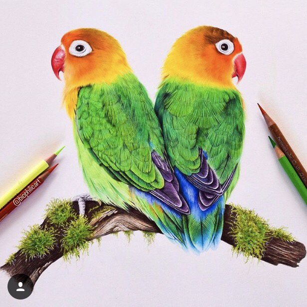 Picture of two lovebirds sitting on a missy branch drawn using colored pencils. Colored pencil bird art.
