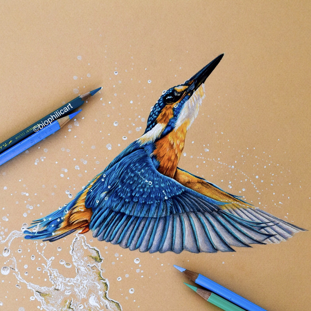 Picture of a Common Kingfisher drawn using colored pencils. Coloured pencils kingfisher bird art.
