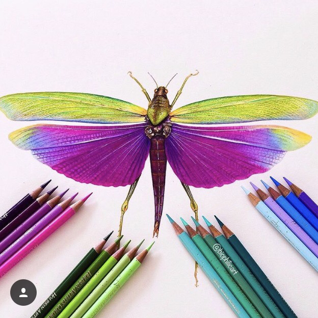 Picture of a Purple Winged Grasshopper drawn using colored pencils. Colored pencil art.