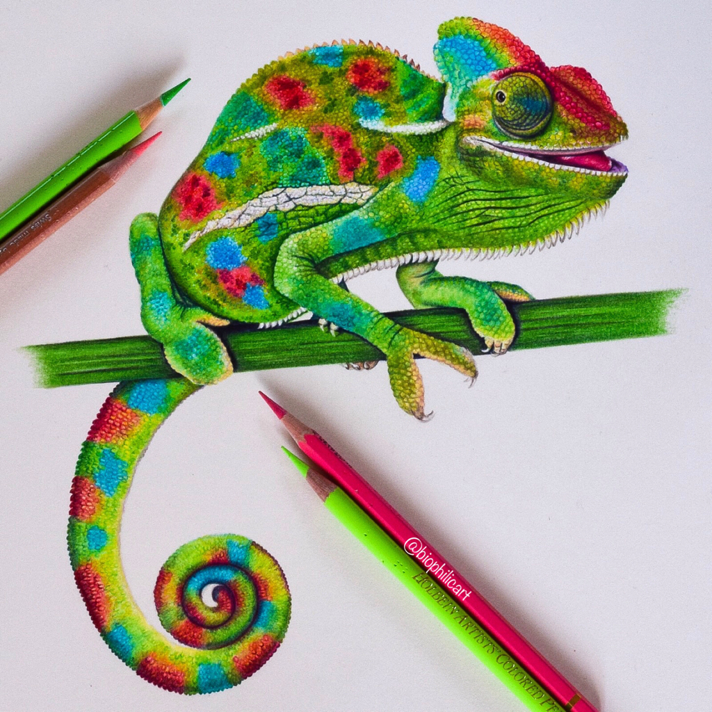 Picture of a green chameleon drawn using colored pencils. Colored pencil drawing of a chameleon.