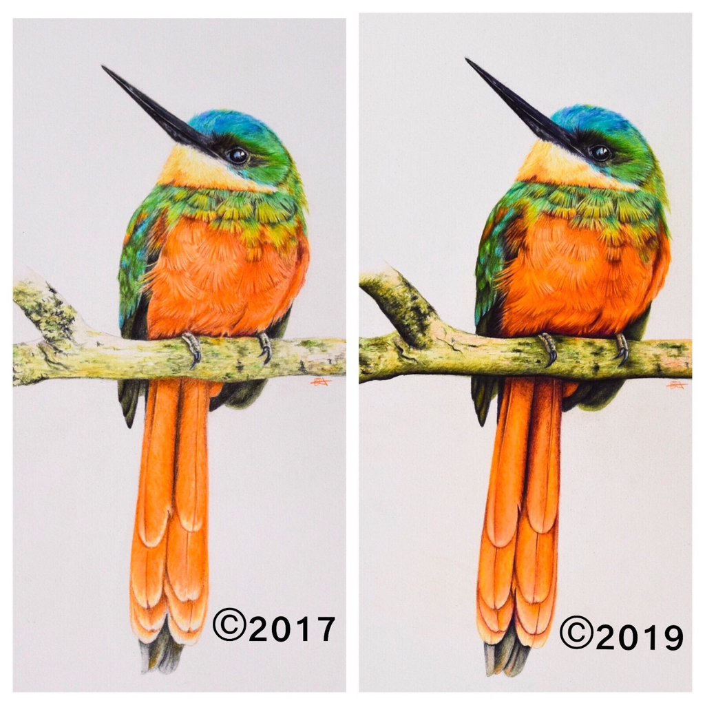 Picture of a jacamar drawn using colored pencils. This photo shows the difference two years of experience can make to your art. This beautiful bird is drawn using  Faber Castell Polychromos and Caran D'ache Luminance and Pablo's and Holbeins .