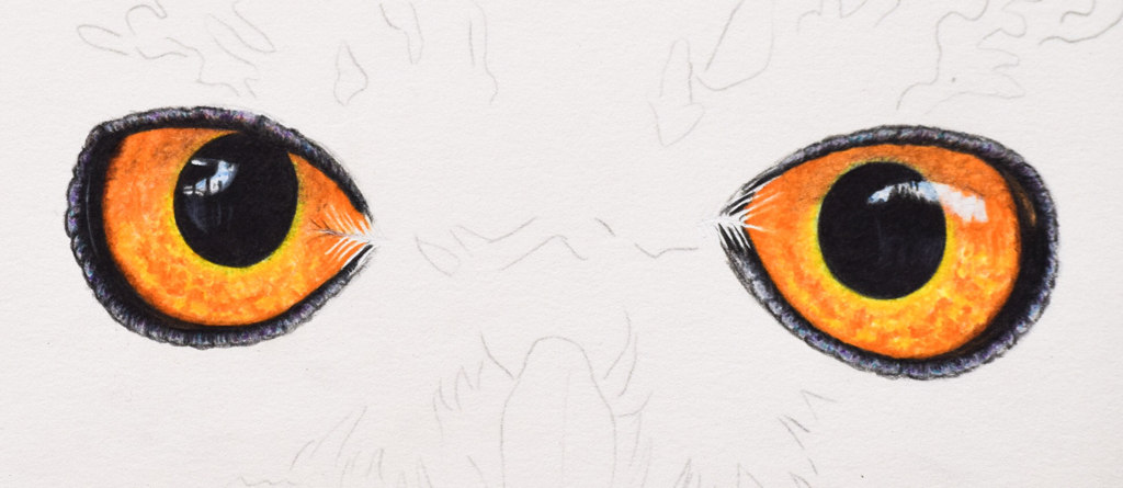 Picture showing step 4 of how to draw owl eyes using colored pencil.