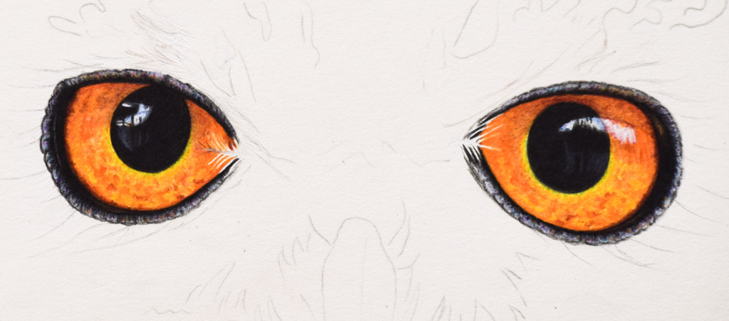Picture showing step 5 of how to draw owl eyes using colored pencil.