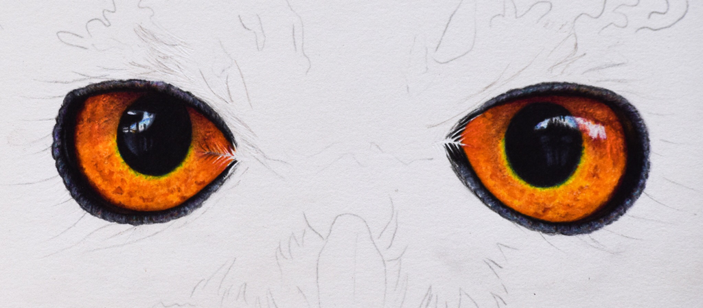 Picture showing step 6 of my tutorial on how to draw owl eyes using colored pencil.