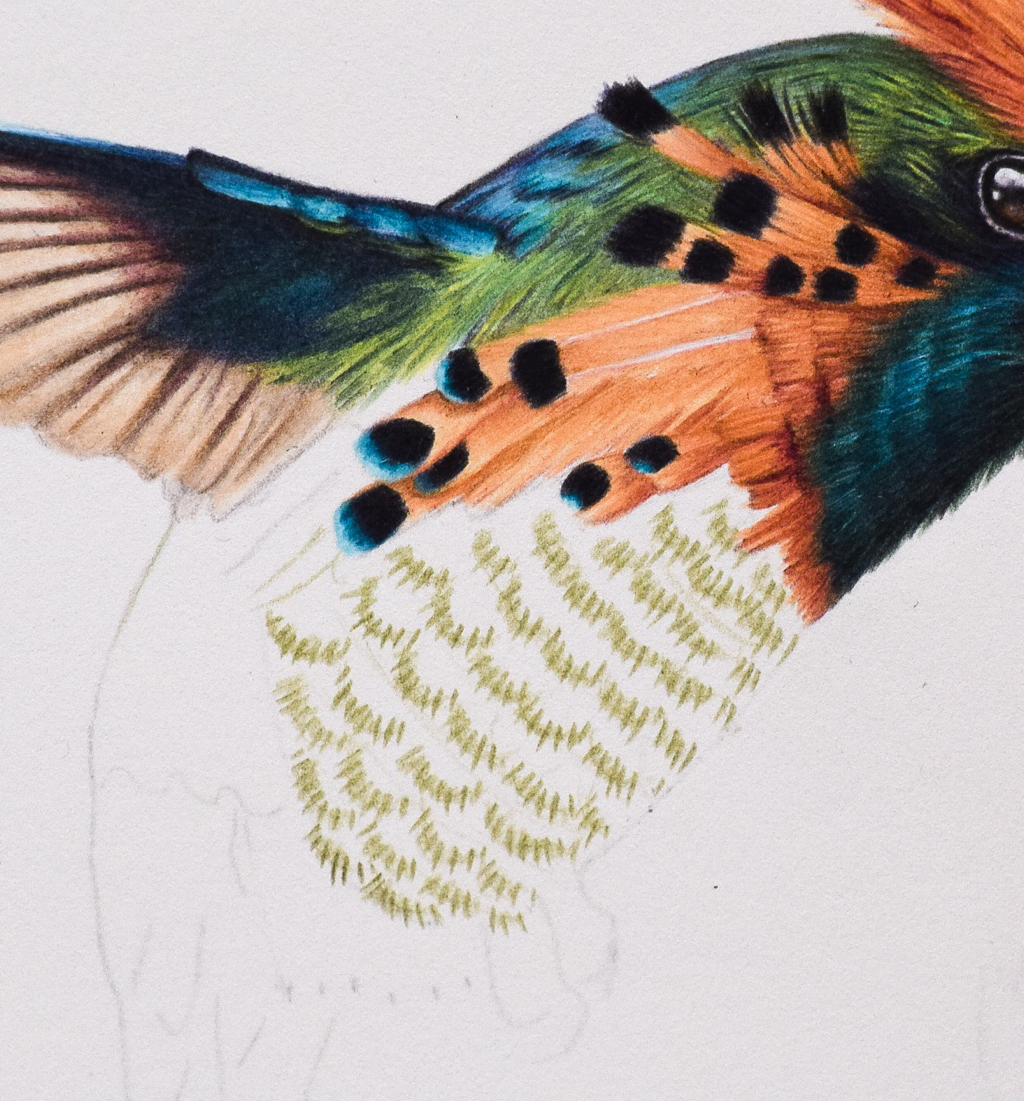 Picture showing step 2 of my tutorial on how to draw hummingbird feathers with colored pencils.