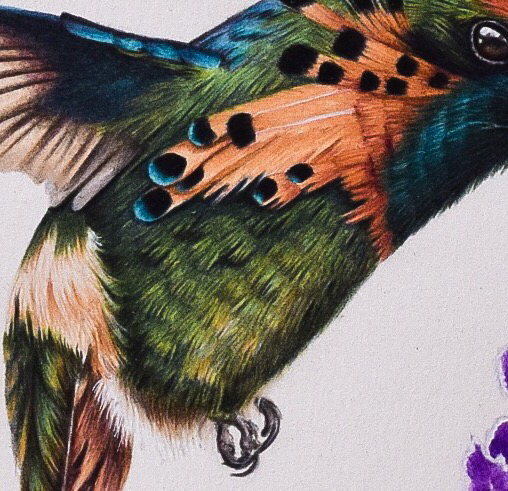Picture showing the final step in my tutorial on drawing a hummingbird's feathers.