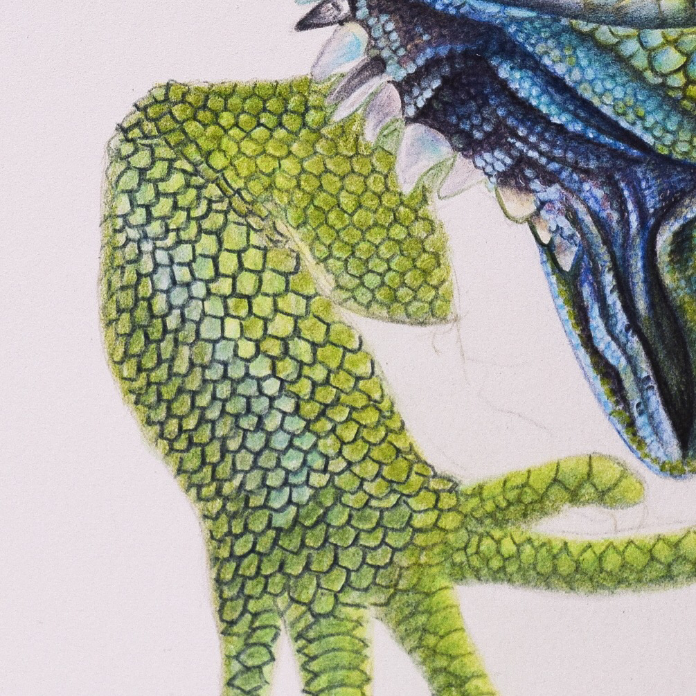 Picture showing step 4 of my tutorial on drawing lizard skin using colored pencils.
