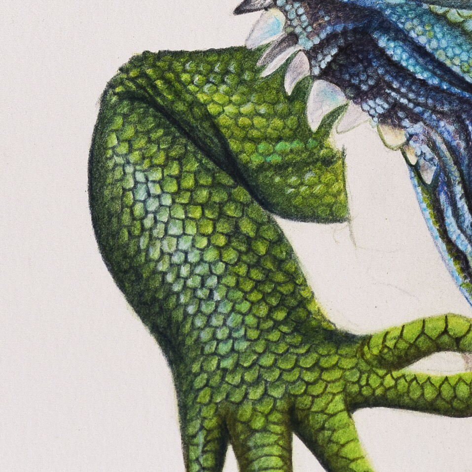 Picture showing step 5 of my guide to drawing lizard skin using coloured pencils.