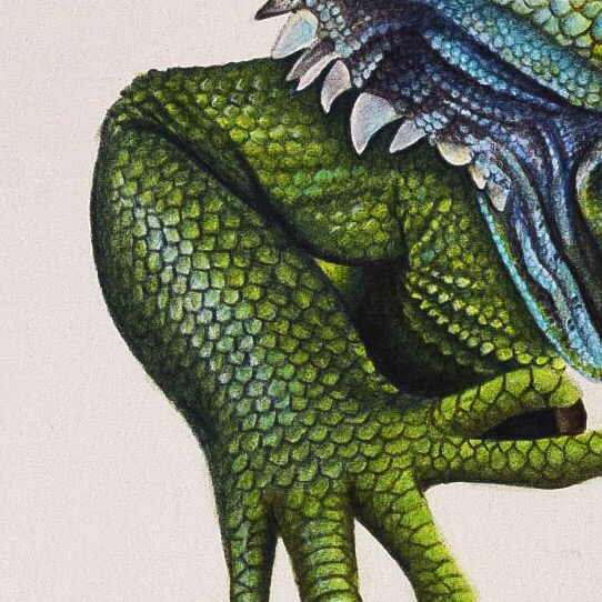 Picture showing step 6 of my tutorial on drawing lizard skin using coloured pencils. Color pencil guide to drawing a lizard.