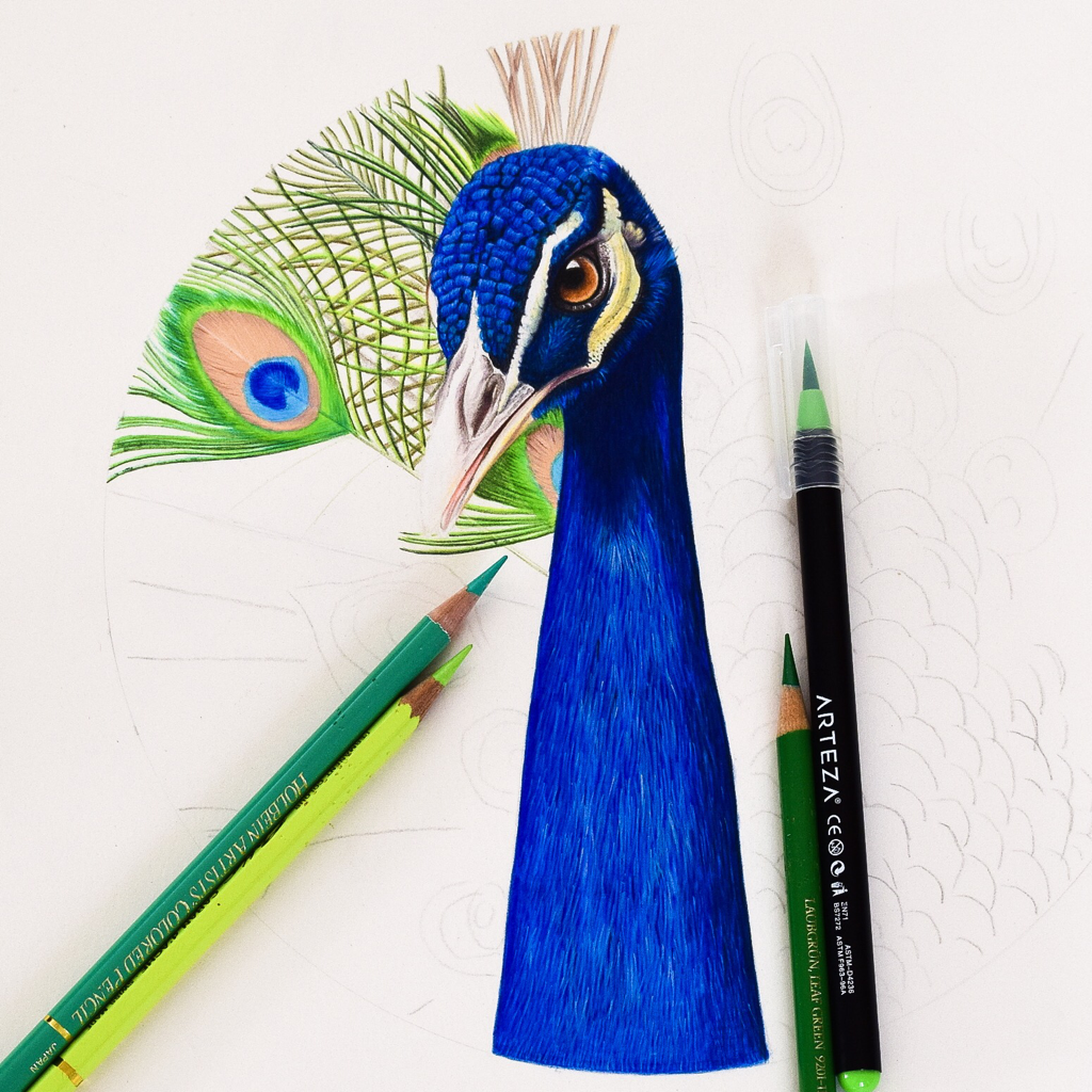 Picture showing a peacock drawn using Arteza brush marker pens and colored pencils.