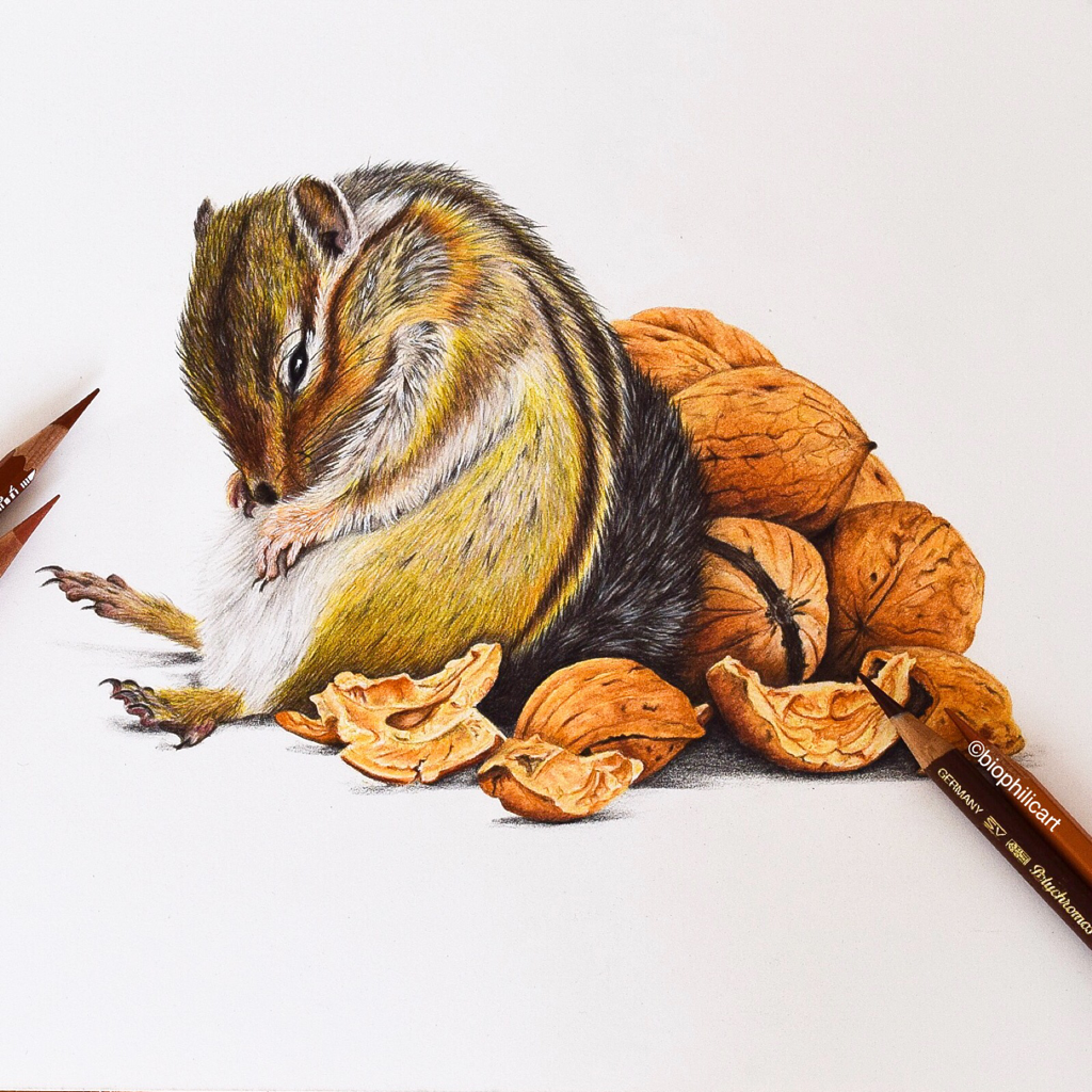 Picture of a fat and sleepy chipmunk who has eaten too many walnuts drawn using coloured pencils, colored pencil wildlife art, drawing of a squirrel.